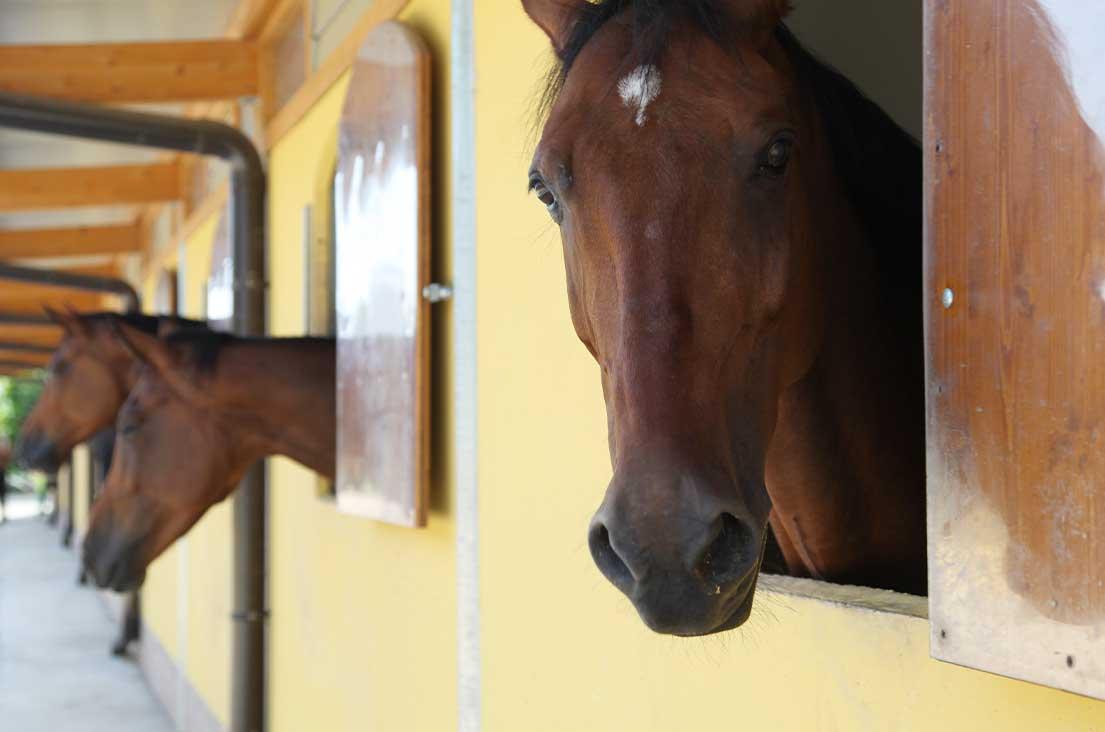 pensione-per-cavalli-belloli